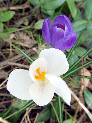 flower buds jeannette and joe courtesy Flickr CC