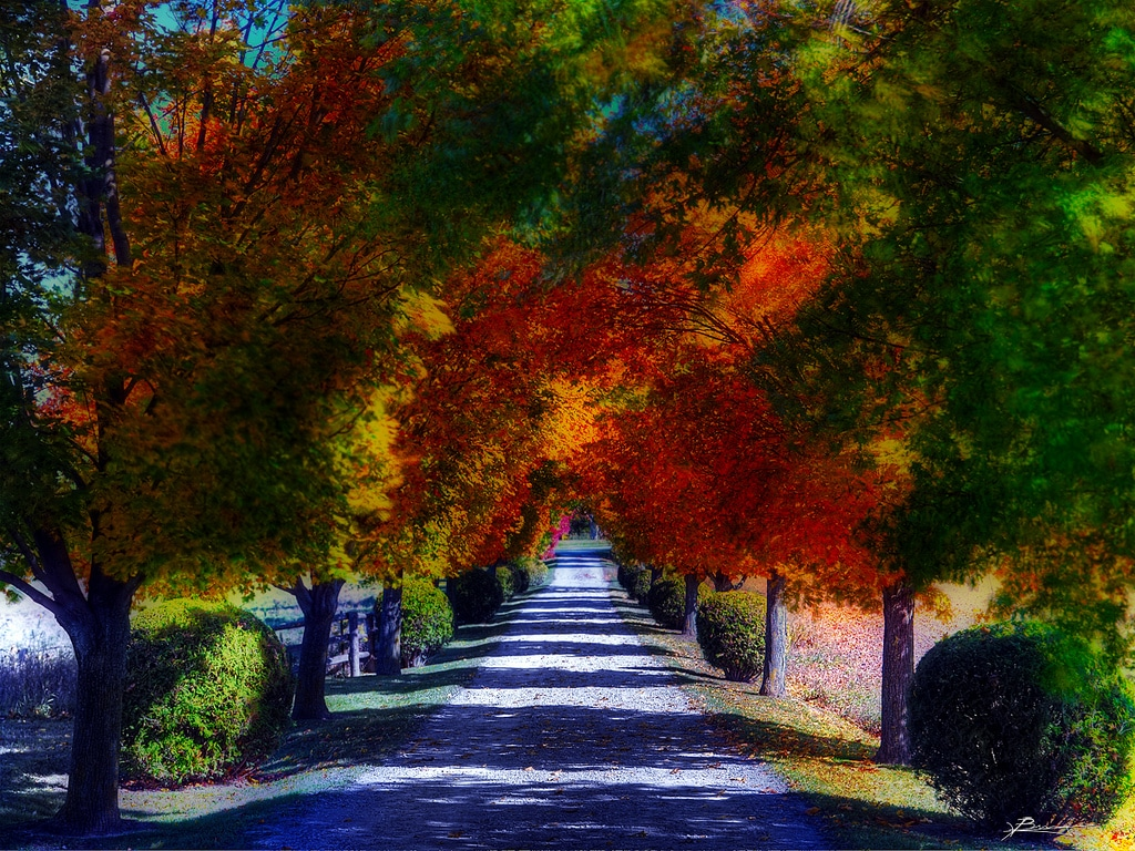 fall leaves over a road courtesy FlickrCC paul bica
