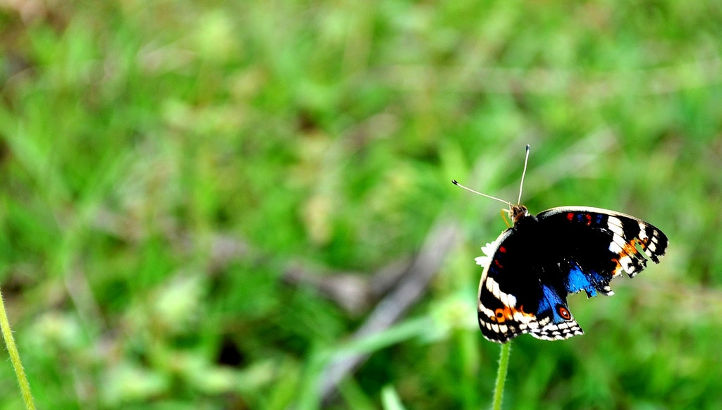 butterfly with broken wing courtesy FlickrCC whologwhy