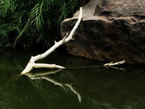tree in water courtesy FlickrCC aloshbennet
