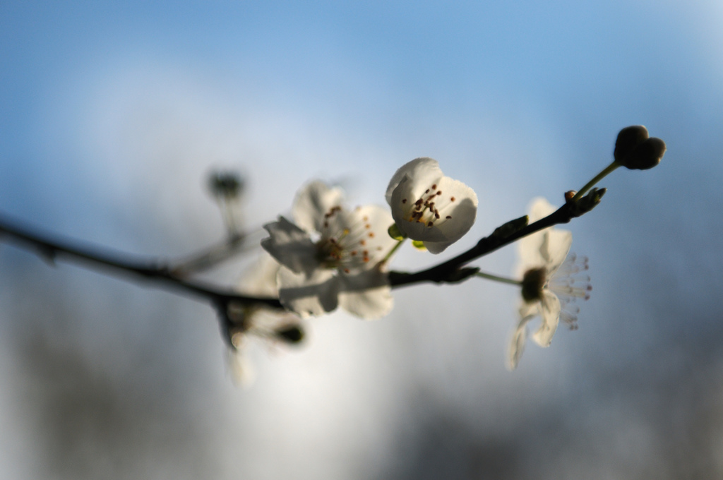 fruti tree blossom lindsey lewis libre living