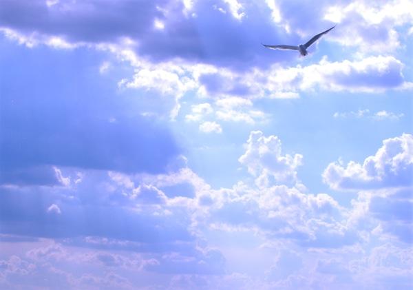 peaceful flight lindsey lewis