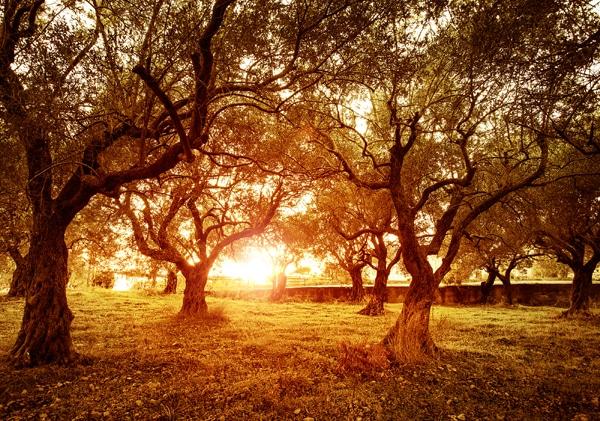 trees on lindsey lewis
