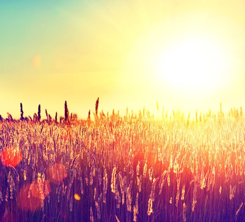 Field. Beautiful Nature Sunset Landscape. Sun. Rural Landscape u