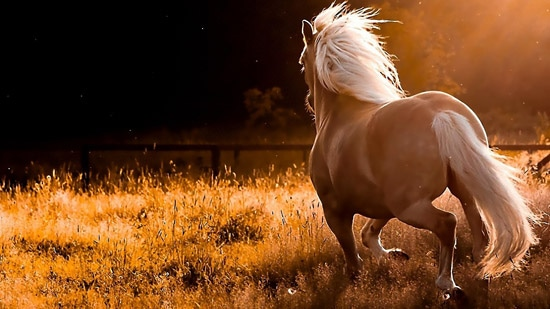 beautiful-horses-11 550 x 309